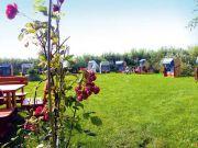 Garten-mit-Rosen